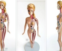 Barbie Anatomia